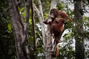 Greenpeace wirft US-Unternehmen Zerstörung von Regenwäldern vor