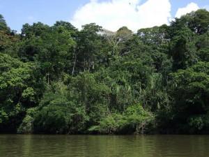Regenwald-Projektwoche mit Monika Lazar